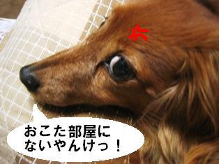 IMG_2928blog.jpg