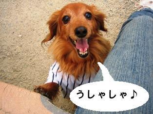 IMG_2971blog.jpg