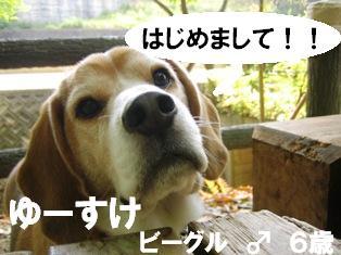 IMG_3026blog.jpg