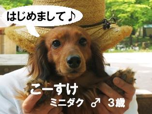IMG_3030blog.jpg