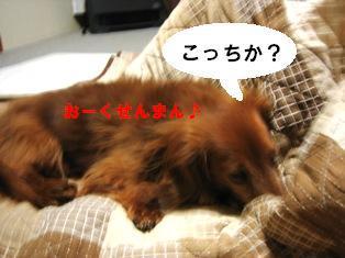 IMG_3166blog.jpg