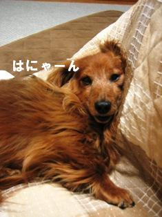 IMG_3176blog.jpg