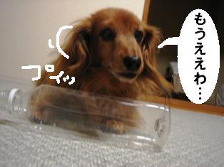 IMG_3545blog.jpg