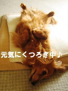 IMG_3559blog.jpg
