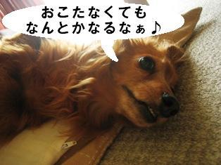 IMG_3560blog.jpg