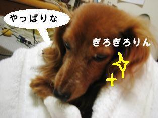 IMG_3595blog.jpg