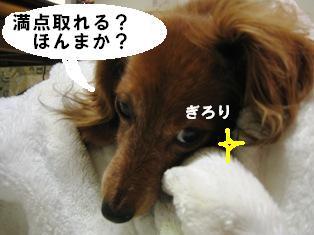 IMG_3597blog.jpg