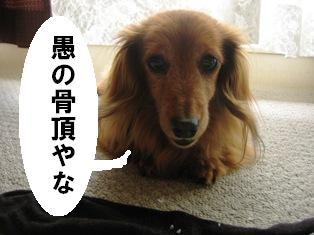 IMG_3613blog.jpg