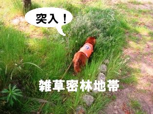 IMG_3617blog.jpg