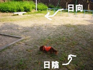 IMG_3618blog.jpg