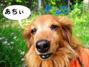 IMG_3621blog.jpg