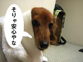 IMG_3638blog.jpg