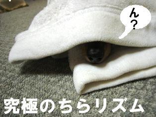 IMG_3644blog.jpg