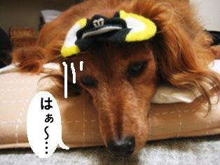 IMG_3707blog.jpg