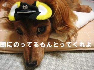 IMG_3708blog.jpg