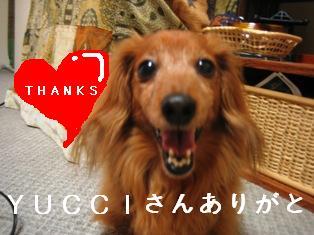 IMG_3772blog.jpg