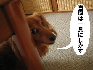 IMG_3820blog.jpg