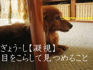 IMG_3823blog.jpg