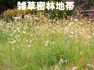 IMG_3835blog.jpg