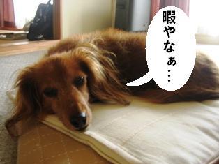 IMG_3927blog.jpg