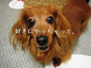 IMG_3939blog.jpg