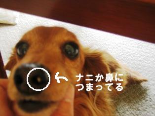 IMG_3970blog.jpg