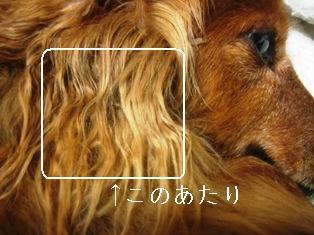 IMG_4001blog.jpg