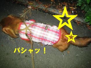 IMG_4005blog.jpg