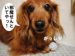 IMG_4067blog.jpg