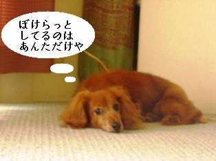 IMG_4175blog.jpg