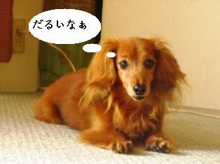 IMG_4177blog.jpg
