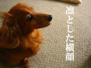 IMG_4181blog.jpg