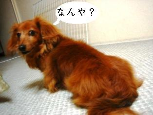 IMG_4185blog.jpg
