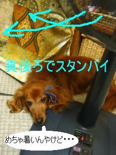 IMG_4193blog.jpg
