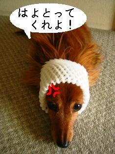 IMG_4241blog.jpg
