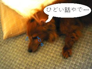 IMG_4267blog.jpg