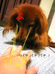 IMG_4345blog.jpg