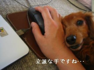 IMG_4423blog.jpg