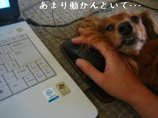 IMG_4425blog.jpg