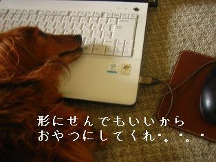 IMG_4484blog.jpg
