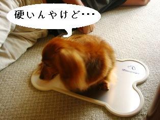 IMG_4514blog.jpg