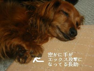 IMG_4531blog.jpg