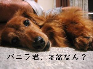 IMG_4581blog.jpg
