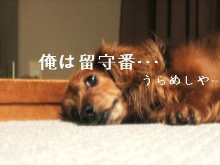 IMG_4649blog.jpg
