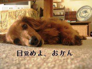 IMG_4735blog.jpg