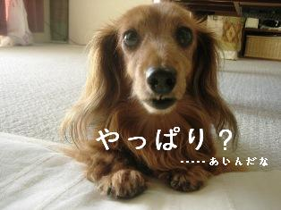 IMG_4779blog.jpg