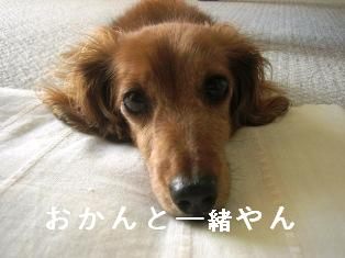 IMG_4780blog.jpg