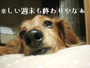 IMG_4793blog.jpg