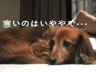 IMG_4873blog.jpg