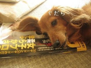 IMG_4939blog.jpg